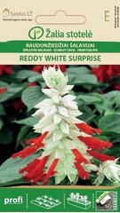 Salvija REDDY WHITE SURPRISE