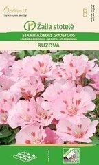 Lielziedu godēcija Ruzova cena un informācija | Lielziedu godēcija Ruzova | 220.lv