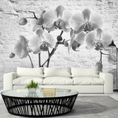 Foto tapete - Orchid in Shades of Gray цена и информация | Foto tapete - Orchid in Shades of Gray | 220.lv