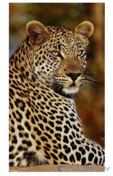 Good Morning pludmales dvielis Leopard 100x180 cm