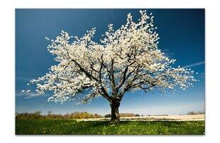 Glezna Ziedošs koks, L cena un informācija | Gleznas | 220.lv
