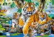 Puzle Puzzle Castorland Tigers by the Stream, 1000 detaļas cena